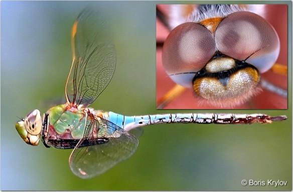 Medvetande 1. Ögon, insekt
